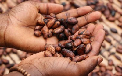 What is Bean-to-Bar Chocolate?