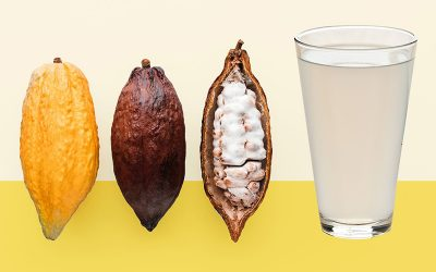 The Cacao Pulp: All You Need to Know About That Mysterious Substance Inside the Cacao Pod