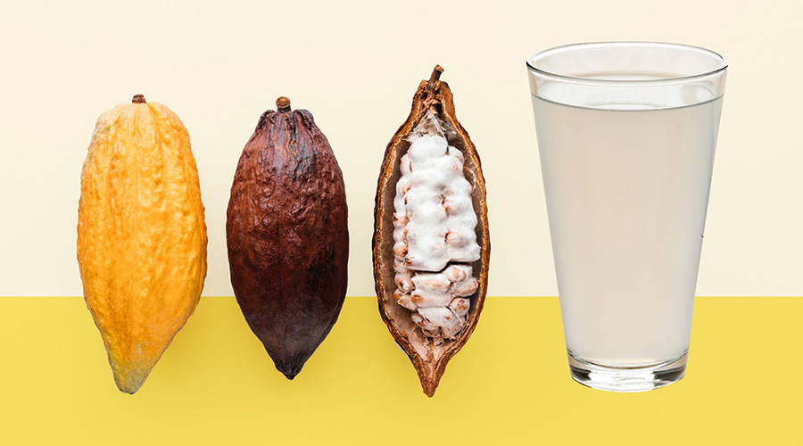 Cacao Pulp All You Need to Know