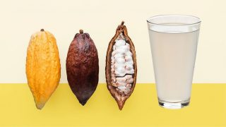 Cacao Pulp: All You Need to Know About That Mysterious Substance Inside the Cacao Pod! ✨  Chances are that, even if you're not a hardcore chocolate nerd, you've probably seen the cacao fruit before.  👨🏻🍳 Pictures of open cacao pods are now triumphantly shown on the packaging of many chocolate bars. More articles online are dedicated to where chocolate comes from and how it's made, showing the entire process from seed to finished chocolate.   📚 Let's just say that there has never been more educational material about chocolate than in 2021!  However, not much attention is given to that mysterious white pulp that surrounds the cacao beans inside the fruit.   🍫 Briefly mentioned in regard to the fermentation process, the white pulp has much more to say (and to offer) to chocoholics than just its temporary use in chocolate making... 🙌 🤤  Read the FULL Article by Sharon @thechocolatejournalist [LINK IN BIO]